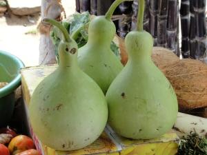 A_aesthetic_bottle_gourd